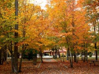 St. Anne Canyonの紅葉